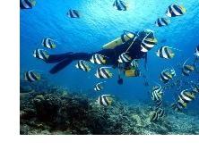 Малдивите са раят за гмуркачите